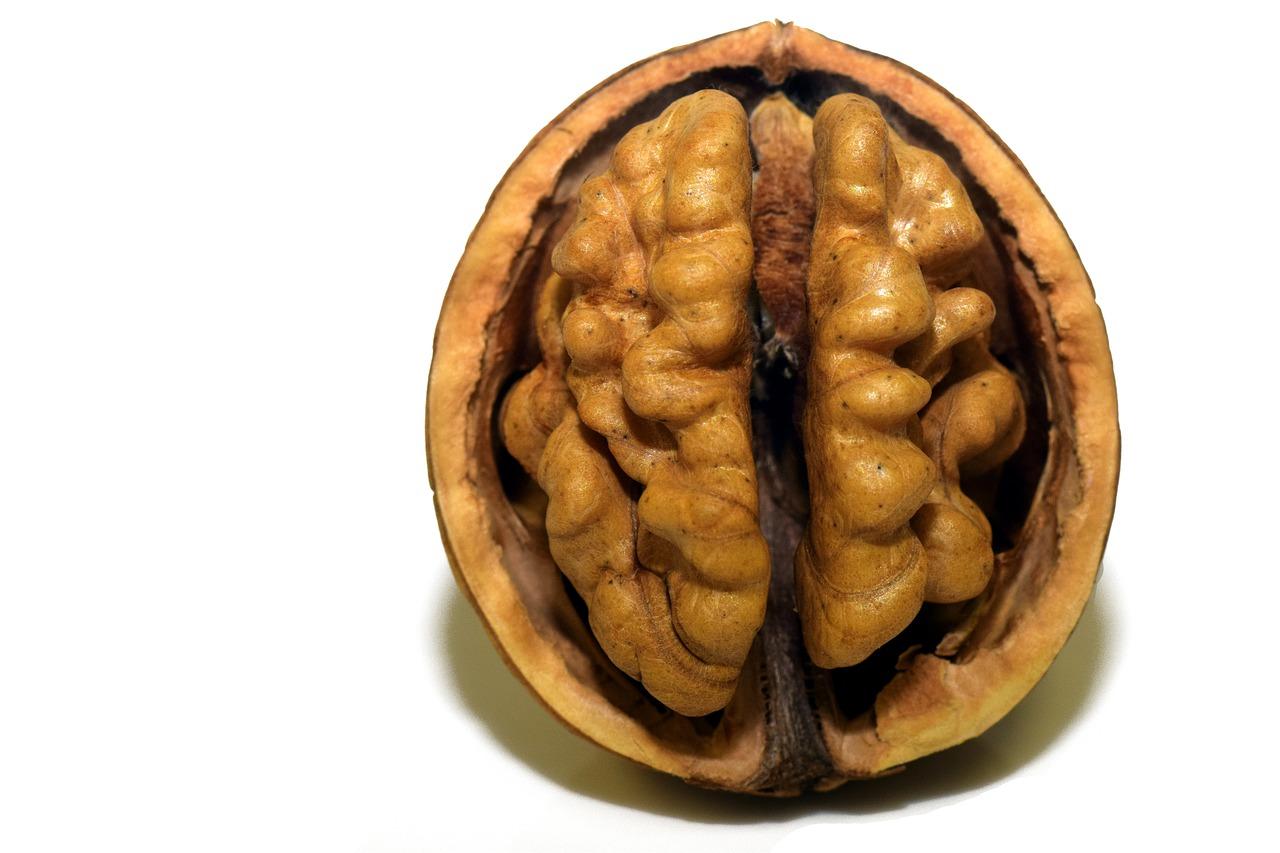 早期緩和ケアクリニック外来の緩和医療専門医(緩和ケア医)大津秀一が解説する がんなどの病気の場合に不安を減らすことができる食事であるオメガ3系脂肪酸 くるみと脳