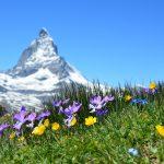 スイスの安楽死と緩和ケア