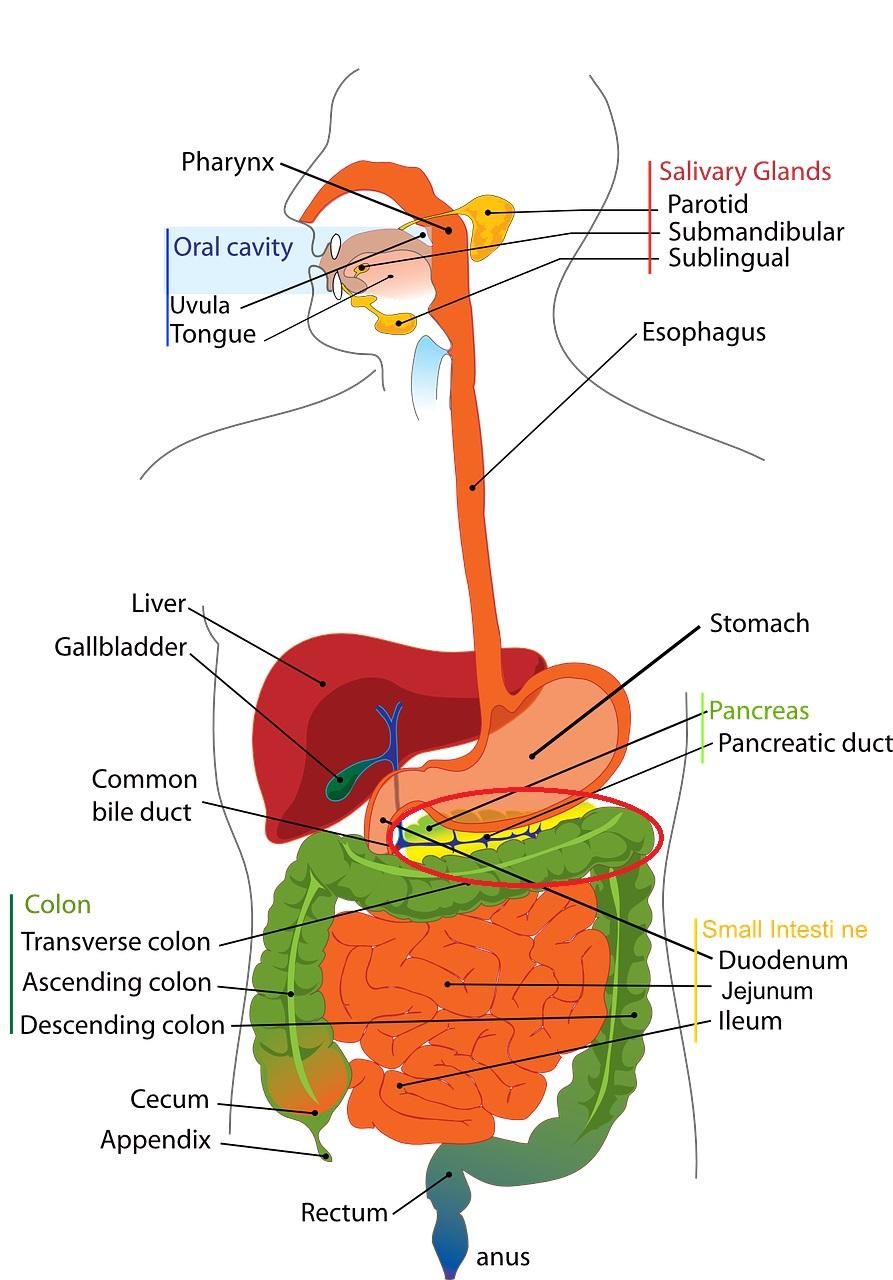 膵臓がん(すい臓がん)末期の苦しみを緩和する方法