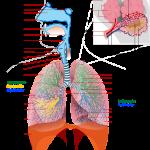 非小細胞肺癌末期で苦しまない方法