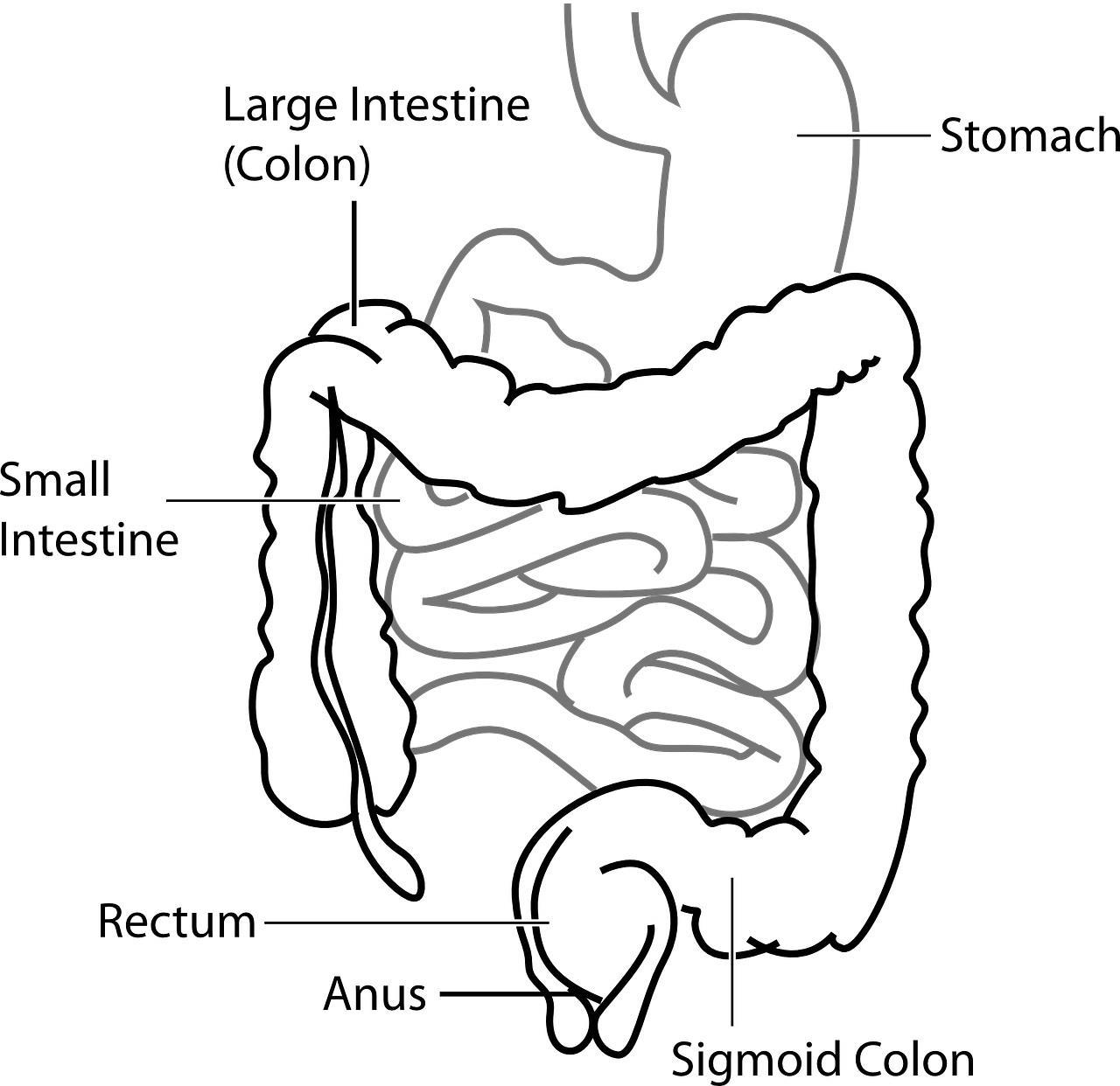 がんのお腹の張りやがん性腹膜炎の症状緩和を解説