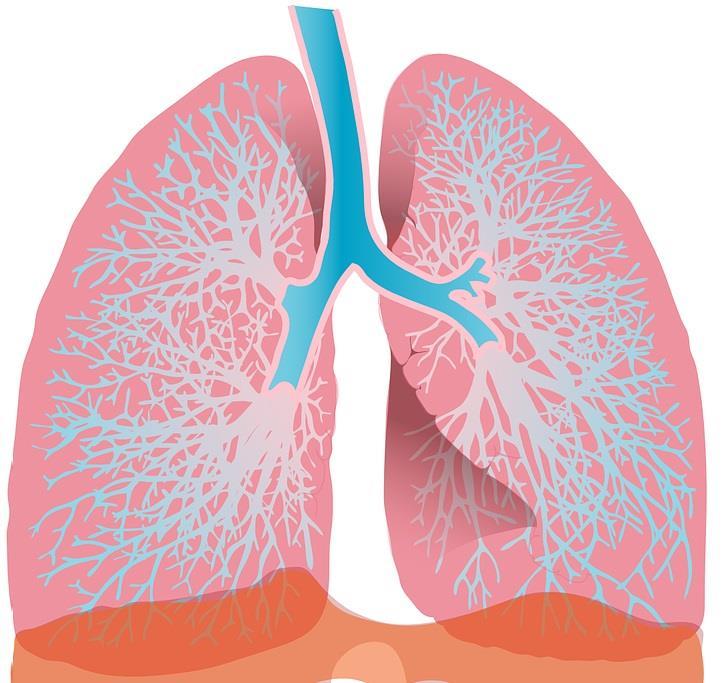 間質性肺炎とベージニオ・イブランス。対策を解説。