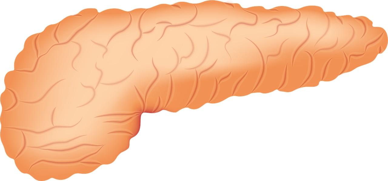 早期緩和ケアクリニック外来の緩和医療専門医(緩和ケア医)大津秀一が解説する膵臓癌のリムパーザ治療