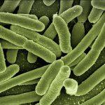 新型コロナウイルス肺炎はプレボテラが原因説を検証 腸内細菌